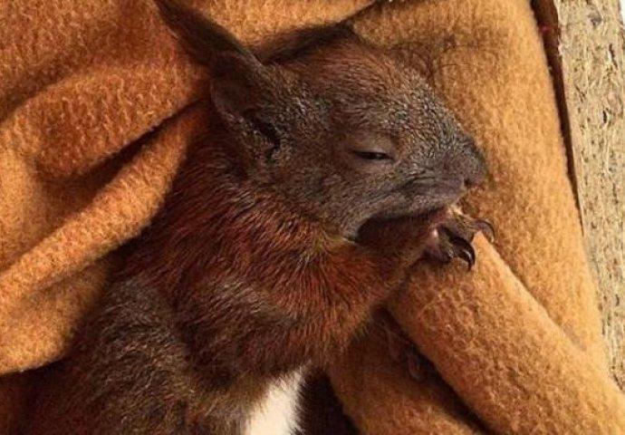 je li žena vjeverica crni gf račun