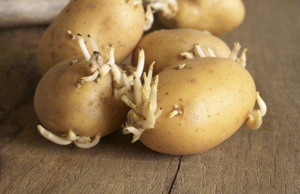 KLICA VAS MOŽE OTROVATI, POSLUŠAJTE SAVJET STRUČNJAKA: Ovo je odličan i neobičan način da spriječite klijanje krompira! | Novi.ba